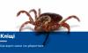 Чим небезпечні укуси кліщів і як вберегтися від них?